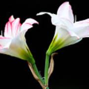 Spring Lilies Art Print