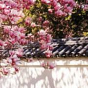 Spring - Magnolia Art Print