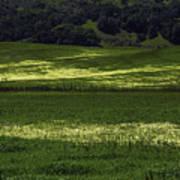 Spring Meadows Of Wildflowers Art Print