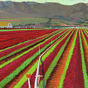 Spring Mix Lettuce Fields Art Print