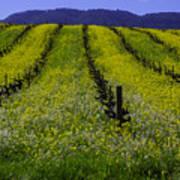 Spring Mustard Field Art Print