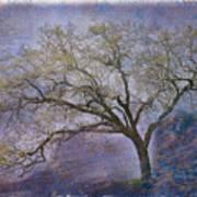 Spring Oak Art Print