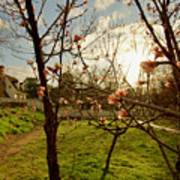 Spring Orchard In Williamsburg Art Print