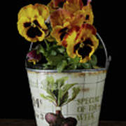 Spring Pansy Flowers In A Pail Art Print