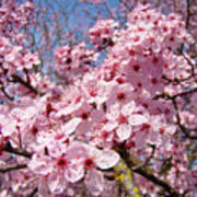 Spring Pink Tree Blossoms Art Print Baslee Troutman Art Print