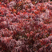 Spring Reds Art Print