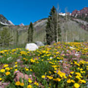Spring Rocky Mountain Landscape Art Print