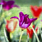 Spring Sensations  Art Print
