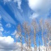 Spring Sky And Cotton Trees Art Print