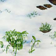 Spring Snowdrops Art Print by Helen Klebesadel