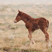 Spring Storm Foal Art Print