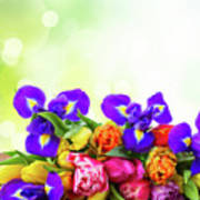 Spring Tulips And Irises Art Print