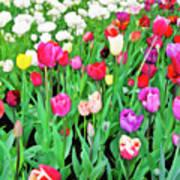 Spring Tulips Flower Field I Art Print