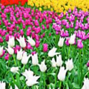 Spring Tulips Flower Field II Art Print by Artecco Fine Art Photography