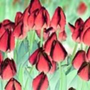 Spring Tulips - Photopower 3012 Art Print