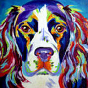 Springer Spaniel - Cassie Print by Alicia VanNoy Call