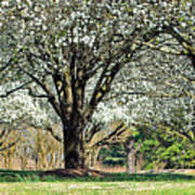 Spring's Canopy Art Print