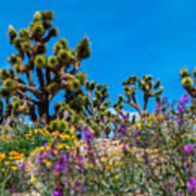 Springtime At The Canyon Art Print