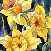 Springtime Daffodils Art Print