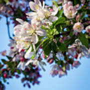 Springtime In Bloom Art Print