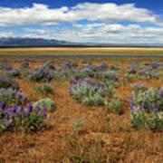 Springtime In Honey Lake Valley Print by James Eddy