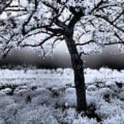 Springtime In Infrared Art Print