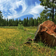 Springtime In Lassen County Art Print