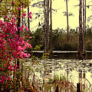 Springtime In The Swamp Art Print