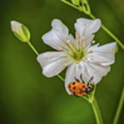 Springtime Ladybug Art Print