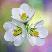Springtime Triplets By Kaye Menner Art Print