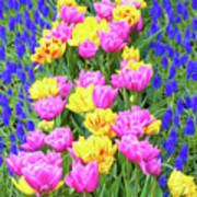 Springtime Tulips 01 Painterly Effecy Art Print