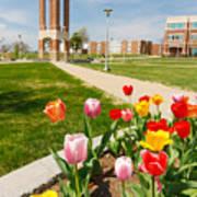 Springtime Tulips Art Print
