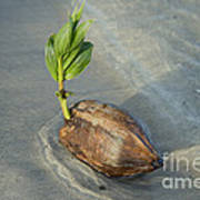 Sprouting Coconut Art Print