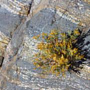 Sprouting Rock Art Print