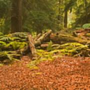 Spruce Logs Leith Hill Surrey 2014 Art Print