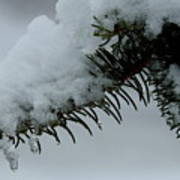 Spruce Needles And Ice Art Print