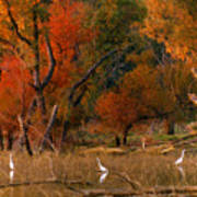 Squaw Creek Egrets Art Print
