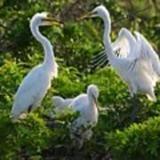 Squawk Of The Great Egret Art Print