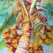 Squire's Coconuts Art Print