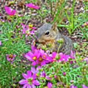 Squirrel Among Coreopsis In Huntington Gardens In San Marino-california   Art Print