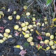 Squirrel Cache In Compost Pile Art Print