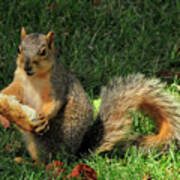Squirrel Eating Pizza Art Print
