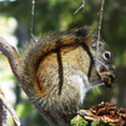 Squirrel Enjoys A Great Meal Art Print