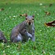 Squirrel Iv Art Print