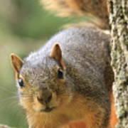 Squirrel Look Art Print