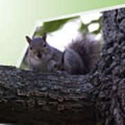 Squirrel On A Limb Art Print
