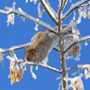 Squirrel On Icy Branches Art Print