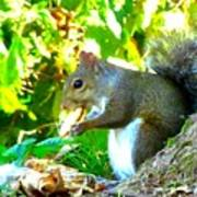 Squirrel1 Art Print