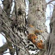 Squirrels At Play Vertically Art Print