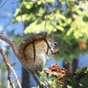 Squirrels Spring Meal Art Print